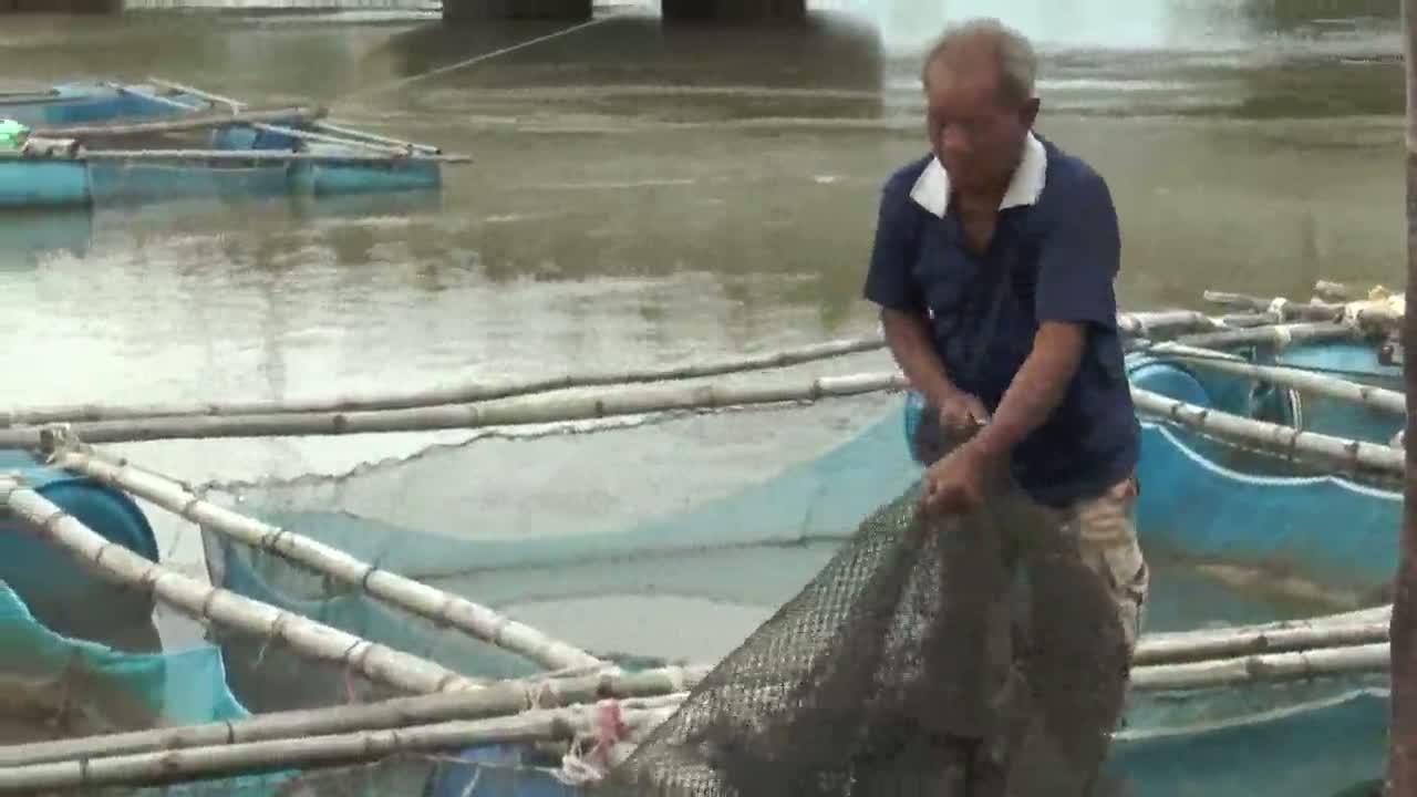 บุรีรัมย์ผู้เลี้ยงปลากระชังเริ่มกระทบน้ำเหนือจากโคราช
