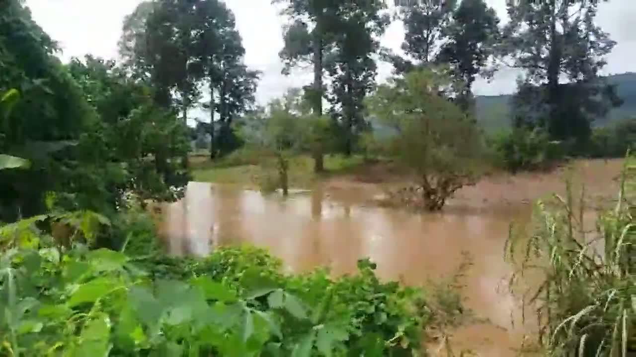 พิษณุโลก171060ลูกช้างป่าถูกน้ำซัดลอยคออยู่ในคลองชมพูยังขึ้นไม่ได้จนท.รีบหาทางช่วย 
